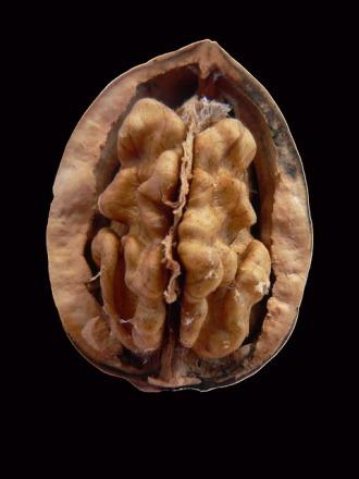 walnut-14062_640